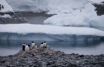 World's largest marine reserve will be established in Antarctica