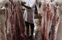 Belgian Walloon region bans kosher and halal slaughter