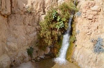 The En Gedi oasis
