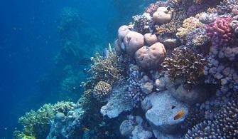 Corals in the Scriptures
