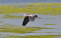 The elegant design of herons