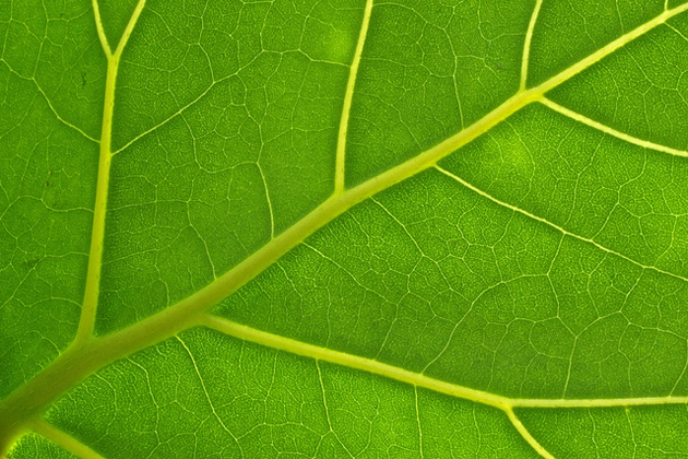 leaf, detail, green