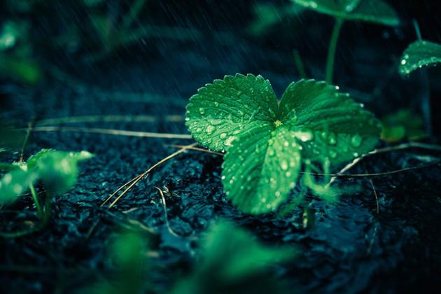 leaf. wet, ground
