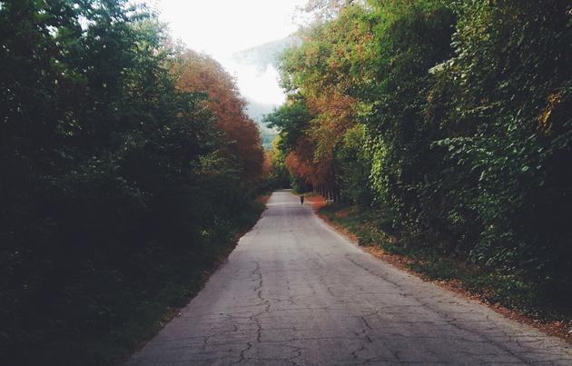 way, chemin, camino, forest, bosque