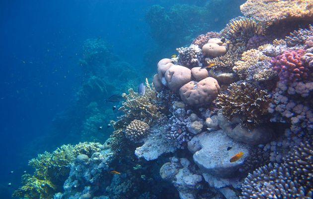 corals, reefs